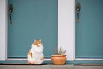 Cat in front of Two Blue Doors