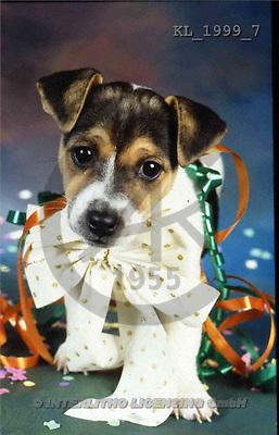 Interlitho, Alberto, ANIMALS, dogs, photos, dog, bow(KL1999/7,#A#) Hunde, perros