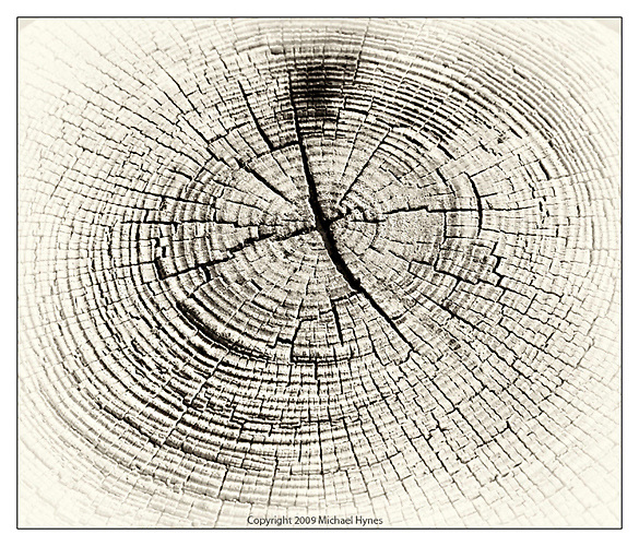 Wood Texture, Cross cut of tree trunk