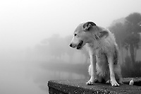 Willow the dog looks at the Halifax River in Ormond Beach, Florida on a foggy Februaury morning.  (Photo by Brian Cleary/www.bcpix.com)