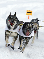 Saturday, March 3, 2012  Michael Williams, Jr.'s dog team charges ahead near Goose Lake during the Ceremonial Start of Iditarod 2012 in Anchorage, Alaska.