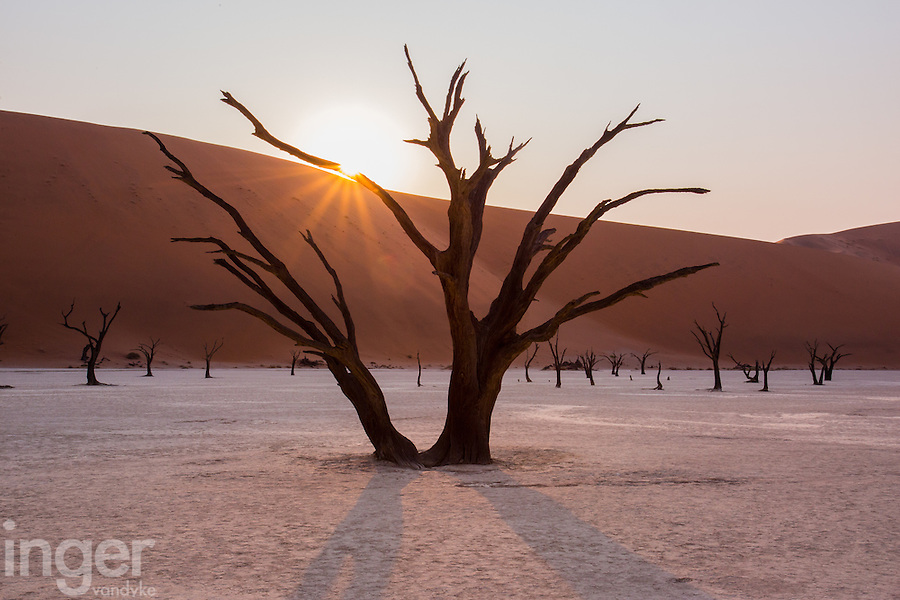 The hauntingly beautiful dead Camel Thorn Trees of Deadvlei in Namibia.