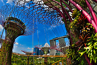 Fisheye perspective on the Super Trees Grove, Cloud Forest Flower Dome, with Marina Bay Sands hotel in the background at gardens by the bay, Singapore
