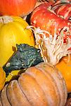 Germany, Bavaria, decorative gourds | Deutschland, Bayern, Zierkuerbisse