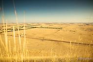Image Ref: CV040<br /> Location: Mt Elephant, Derrinallum<br /> Date: 1st March 2014