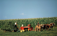 With a five-horse team steered by an Amish woman, a hay baler is pulled through an alfalfa hay field and bales are stacked on a wagon by an Amish male. Amish husband and wife. Lancaster Pennsylvania United States farm.