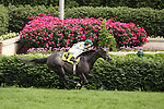 Cauy's Humor with Miguel Mena wins the 7th race at Churchill Downs. 05.15.2010
