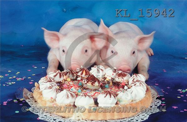 Interlitho, Alberto, ANIMALS, pigs, photos, 2 pigs, cake(KL15942,#A#) Schweine, cerdos