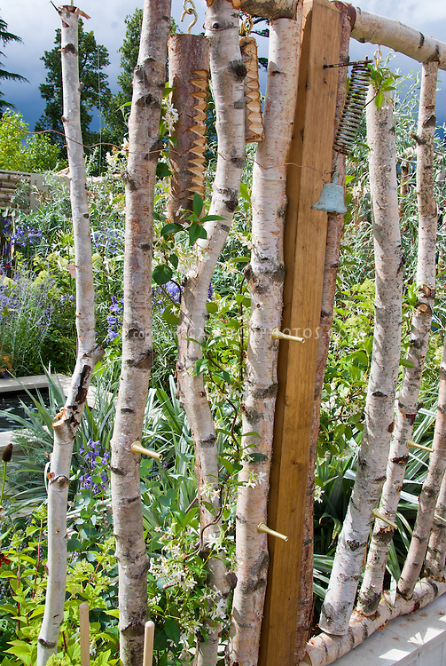 Betula tree bark with vine, birch tree branches used as poles for climbing vine Jasmine