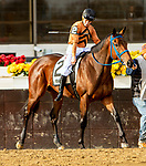DECEMBER 01, 2018 : Girl of Tosconova in the Demoiselle Stakes at Aqueduct Racetrack on December 24, 2018 in Ozone Park, NY.  Sue Kawczynski/ESW/CSM
