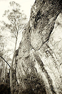 Image Ref: T052<br />