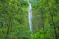 Waimoku Falls at Kipahulu, Maui.  After a two mile hike thru several bamboo forests hikers are greeted with this view in Haleakala National Park.