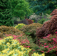 A colourful array of Japanese maples is among the many specimens at Ramster garden