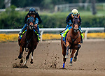 October 23, 2021: Corniche works in preparation for the Breeders' Cup Juvenile at Santa Anita Park in Arcadia, California on October 23, 2021. Evers/Eclipse Sportswire/CSM