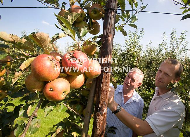 Driel, 110908<br /> Kuppens en van Dijk van OFH taxateren Jonagold appels die beschadigd zijn door de extreme hagelbui van 23 juni.<br /> <br /> Foto: Sjef Prins - APA Foto