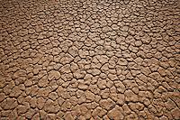 Mud Mosaic