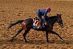 November 5, 2020: Battleground, trained by trainer Aidan P. O'Brien, exercises in preparation for the Breeders' Cup Juvenile Turf at Keeneland Racetrack in Lexington, Kentucky on November 5, 2020. John Voorhees/Eclipse Sportswire/Breeders Cup/CSM