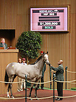 September 11, 2014: Hip #593 Tapit - Dream Rush colt consigned by Taylor Made Sales, sold for $1,200,000 at the Keeneland September Yearling Sale.   Candice Chavez/ESW/CSM