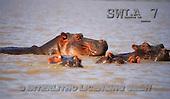 Carl, ANIMALS, wildlife, photos(SWLA7,#A#)