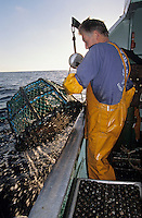 """Europe/France/Bretagne/29/Finistère/Saint-Guénolé: Pêche au homard à bord du """"Galathée"""" - Jean-Paul Girault lève un casier [AUTORISATION N° 260] - Remontée des nasses"""