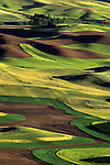 Hills patterns of cultivated newly planted wheat from Steptoe Butte State Park, Eastern Washington State USA