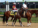 June 21, 2014: Speedinthruthecity and jockey Julien Leparoux in the post parade before a win in the Roxelana Stakes at Churchill.  Owner Winchell Thoroughbreds, trainer Steve Asmussen.  ©Mary M. Meek/ESW/CSM