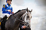HALLANDALE FL - FEBRUARY 27: Mohaymen #6, ridden by Junior Alvarado enters the winners circle after winning the Xpressbet.com Fountain of Youth Stakes at Gulfstream Park on February 27, 2016 in Hallandale, Florida.(Photo by Alex Evers/Eclipse Sportswire/Getty Images)
