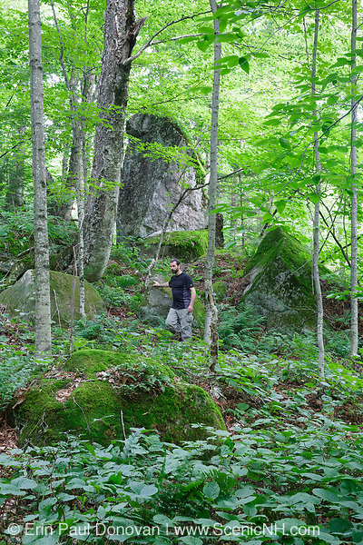 Forest in Kinsman Notch in North Woodstock, New Hampshire USA during the summer months. This area was logged by the Johnson Lumber Company (Gordon Pond Railroad, in operation from 1907-1916).