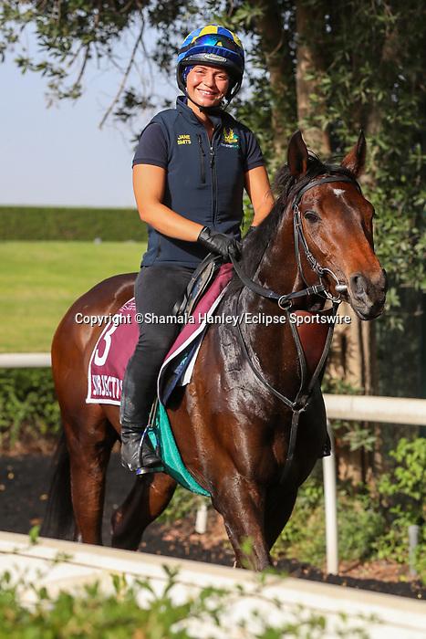 March 25, 2021: Subjectivist (GB) trains on the track for trainer Mark Johnson at Meydan Racecourse, Dubai, UAE. Shamela Hanley/Eclipse Sportswire/CSM