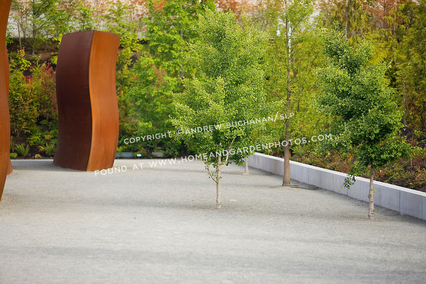 """Here, interspersed among Richard Serra's, """"Wake"""" are lone gingko trees.  Set amidst a field of plain gravel, the space surrounding and within the individual pieces and trees becomes as much a part of the sculpture as the pieces themselves.   SAM's Olympic Sculpture Park, Seattle, WA."""