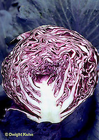 HS37-005b  Red Cabbage - Ruby Ball