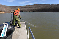Aaron Freeman hauls in a net used to capture fish during an Arkansas Game and Fish Commission walleye survey at Lake Fort Smith. Walleye were the target species, but fisheries biologist also evaluated the health of white bass and other species at the reservoir.<br />(NWA Democat-Gazette/Flip Putthoff)