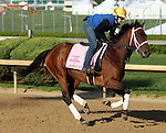 April 20, 2014  Aurelia's Belle and rider Calamity Compton gallop at Churchill Downs.  She recently won the Bourbonette Oaks for trainer Wayne Catalano and owner James F. Miller.