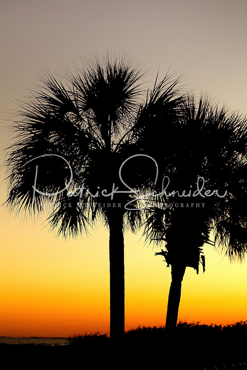 Photo of beach and silhouetted palm trees on Wild Dunes in the Isle of Palms, South Carolina.