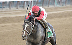 Bitumen (no. 5), ridden by Javier Castellano and trained by Eddie Kenneally, wins the 102nd running of the grade 3 Sanford Stakes for two year olds on July 23, 2016 at Saratoga Race Course in Saratoga Springs, New York. (Bob Mayberger/Eclipse Sportswire)