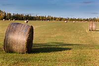 Bales of straw from a field of Barley grain, Delta Junction, Alaska.