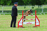 2019 05 17 59th National Police Dog Trials,Tredegar House, Newport, Wales, UK