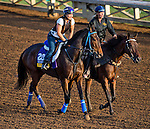 October 27, 2014:  Stanwyck, trained by John Shirreffs, exercises in preparation for the Breeders' Cup Distaff at Santa Anita Race Course in Arcadia, California on October 27, 2014. Scott Serio/ESW/CSM