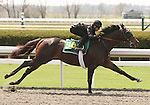 07 April 2011.  Hip #90 More Than Ready - Airizon colt, consigned by Wavertree Stables.