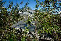 Crashed aircraft, Nome Alaska. Photo by James R. Evans