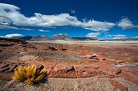 Salar de Aguas Calliente lagoon and coiron grass panorama with the Láscar Volcano under a blue sky and white clouds, San Pedro de Atacama Chile