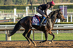 ARCADIA, CA  OCTOBER 31.Breeders' Cup Juvenile Turf Sprint entrant King Neptune, trained by Aidan P. O'Brien,   exercises in preparation for the Breeders' Cup World Championships at Santa Anita Park in Arcadia, California on October 31, 2019.  (Photo by Casey Phillips/Eclipse Sportswire/CSM)