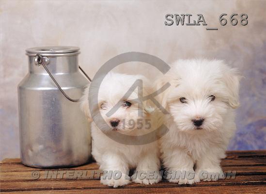 Carl, ANIMALS, photos(SWLA668,#A#) Hunde, perros