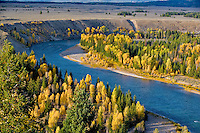 Snake river and fall colored aspens and cottonwood. Grand Teton National Park, WY