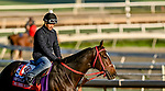 October 28, 2019 : Breeders' Cup Sprint entrant Hog Creek Hustle, trained by Vickie L. Foley, exercises in preparation for the Breeders' Cup World Championships at Santa Anita Park in Arcadia, California on October 28, 2019. Scott Serio/Eclipse Sportswire/Breeders' Cup/CSM