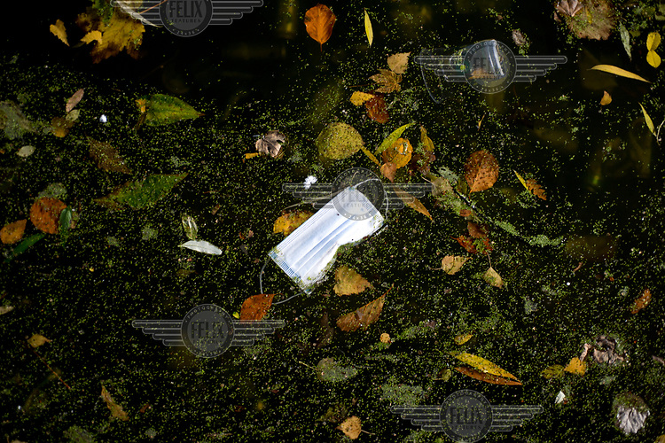 A discarded face mask floats among autumn leaves in the Regents Canal, LB Hackney.