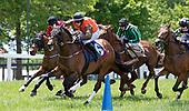 VGC Races - Preview horses