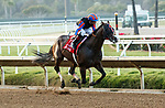 """DEL MAR, CA  AUGUST 28 :  #1 Ginobili, ridden by Drayden Van Dyke, in the stretch of the Pat O'Brien Stakes (Grade ll) Breeders Cup """"Win and You're In"""" Dirt Mile Division on August 28, 2021 at Del Mar Thoroughbred Club in Del Mar, CA.(Photo by Casey Phillips/Eclipse Sportswire/CSM)"""