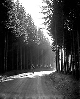 Pfc. Margerum, Philadelphia, Pa, walks the road through a peaceful forest in the Bastogne area, as he returns from the front lines.  Belgium or Luxembourg.  December 27, 1944.  Pfc. Donald R. Ornitz.  (Army)<br /> NARA FILE #:  111-SC-199296<br /> WAR & CONFLICT BOOK #:  1076