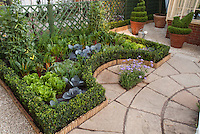 Growing vegetables on the patio in backyard: beans, tomato, rainbow chard, lettuce salad greens, boxwood, lattice fence, herbs, topiary shrub evergreens in containers, next to house